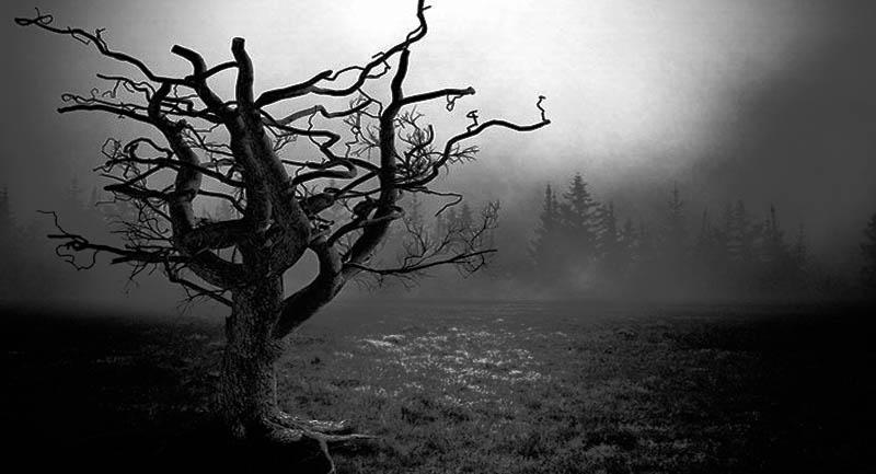 El árbol de muerte